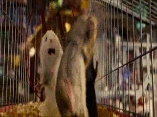 миссия дарвина(ржачные мыши)
